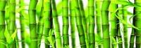 Фартук Зеленый бамбук