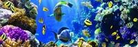 Фартук Коралловый риф